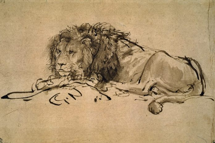 lion-resting-1652